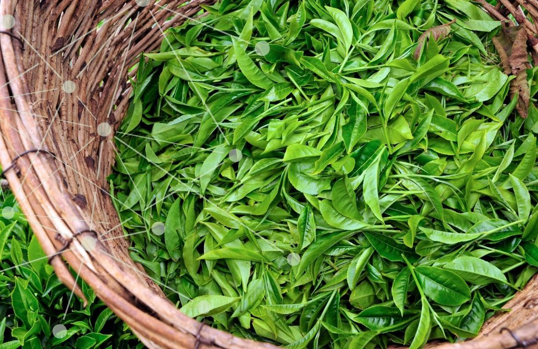 Catalysing systemic action for a more sustainable tea sector – the story of Tea 2030
