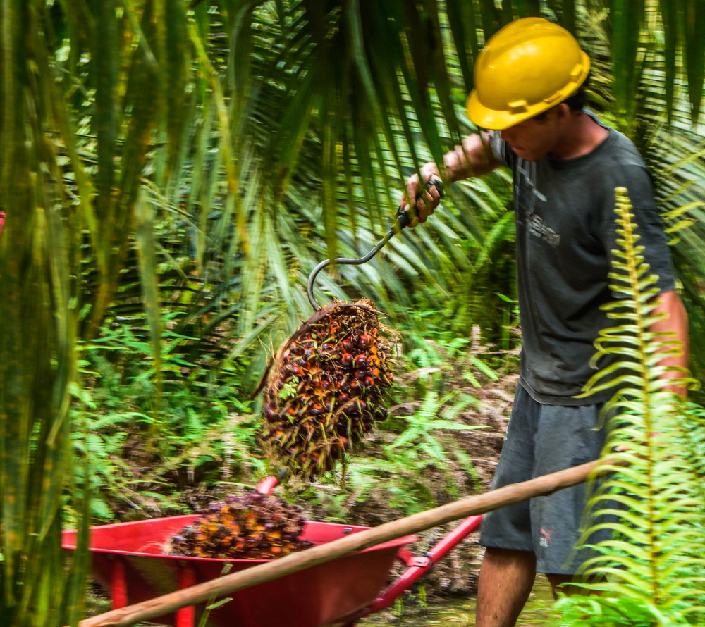 Palm oil worker in Indonesia
