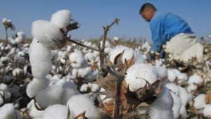 Cotton 2040: aligning sustainability impact metrics